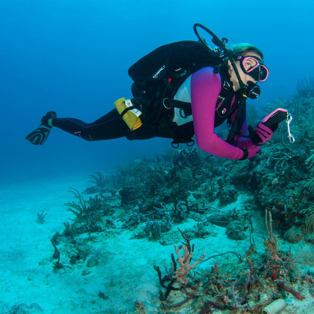 diver on reef underwater navigation photo by howard ehrenberg